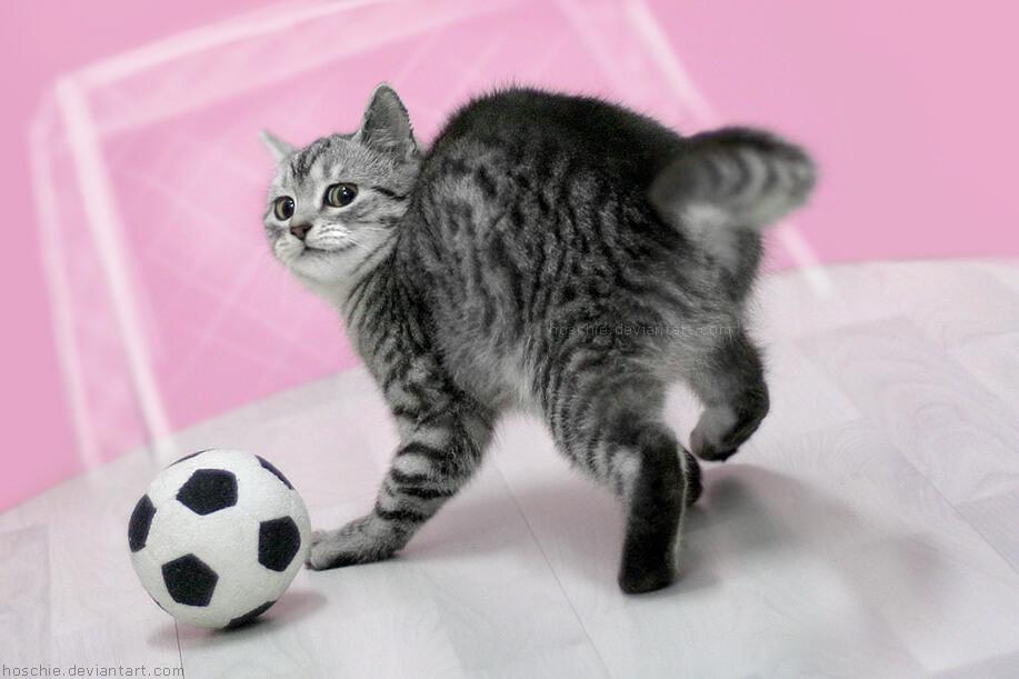 cutest cat pictures 4