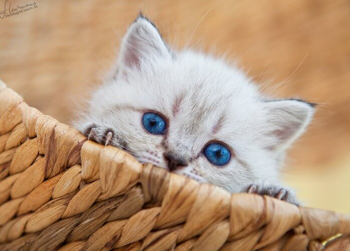 cutest cats ever 40