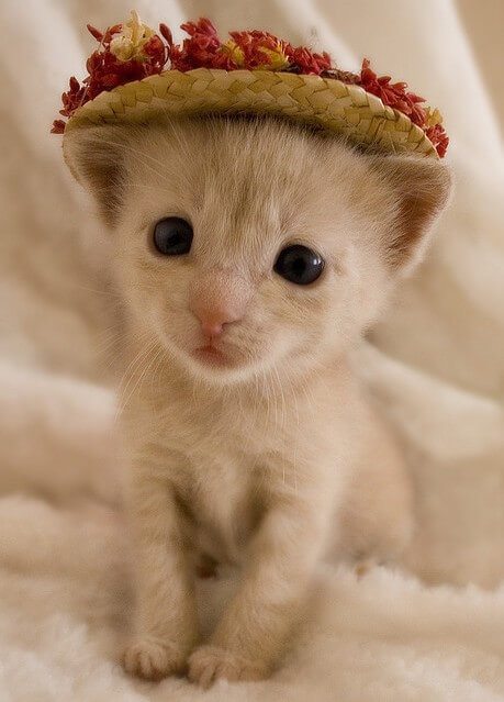 cutest cats ever 41