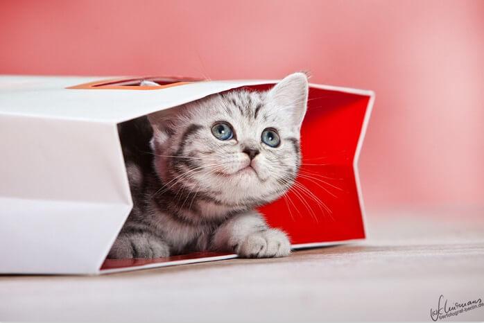 cute kittens 42