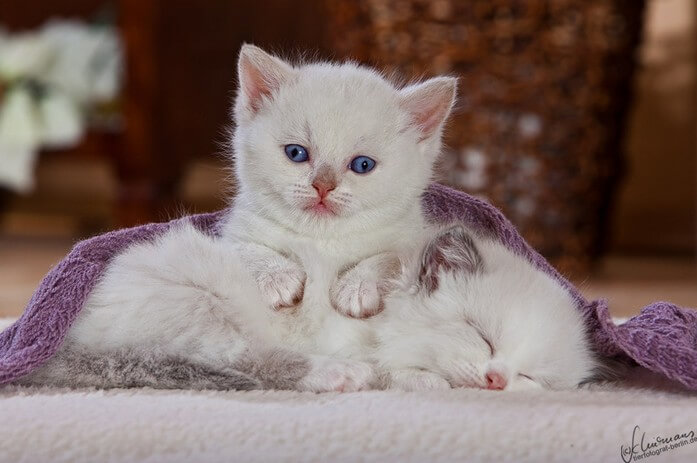 cute kittens 43