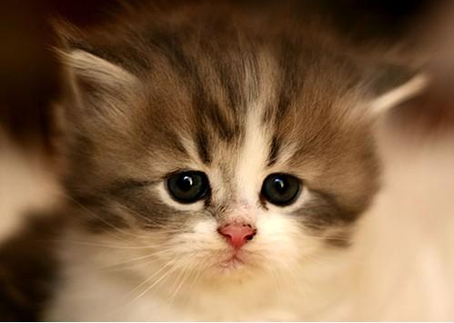 cute cats 44