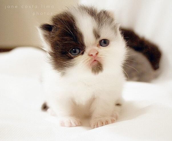 cute cats 46