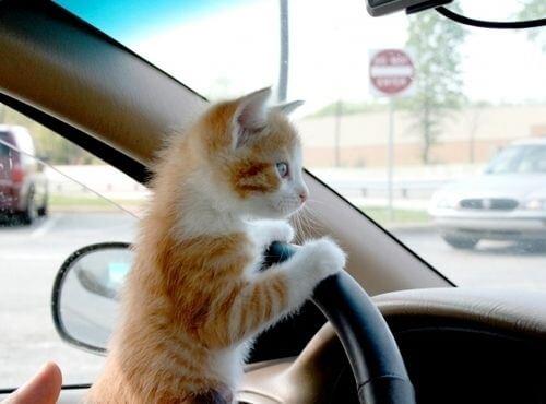 cutest cat pictures 5