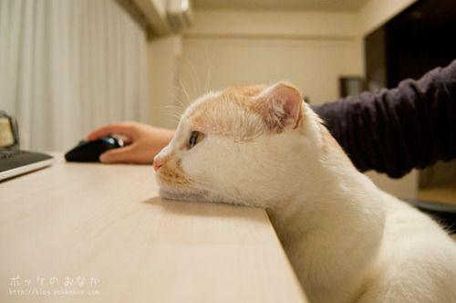 cutest cat pictures 7