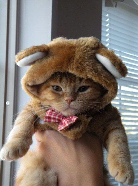 adorable cats 9