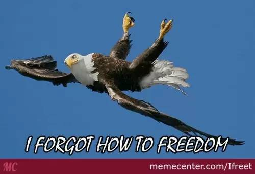 freedom images 11 (1)