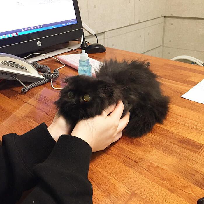gimo the kitten 18 (1)