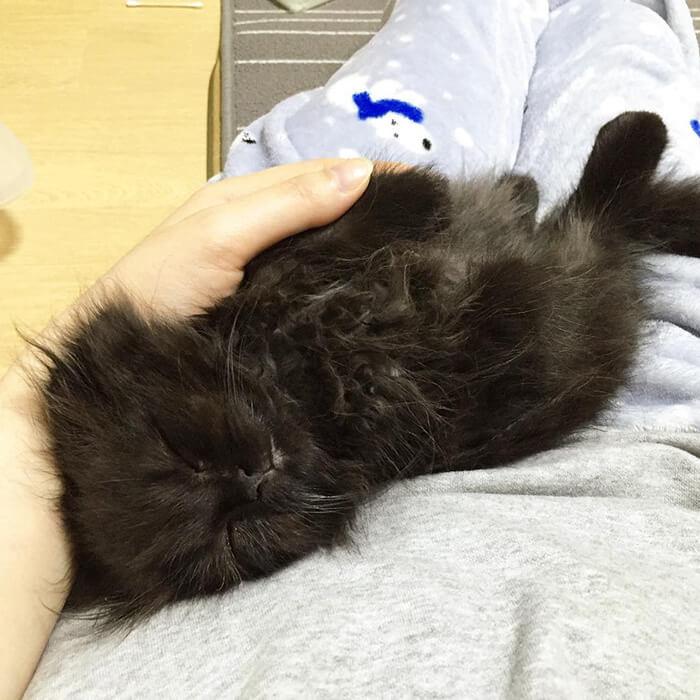 gimo the kitten 19 (1)