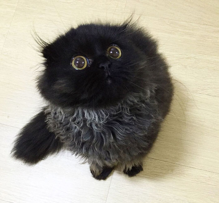 biggest eyes cat 2 (1)