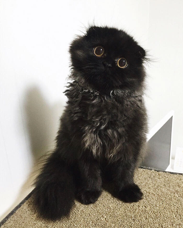 gimo the kitten 20 (1)