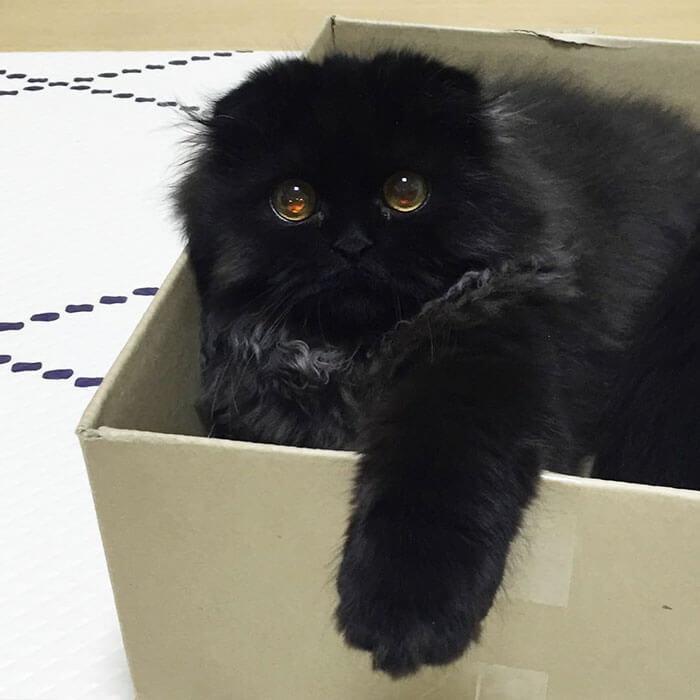 gimo the kitten 21 (1)