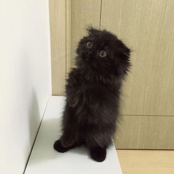 biggest eyes cat 3 (1)