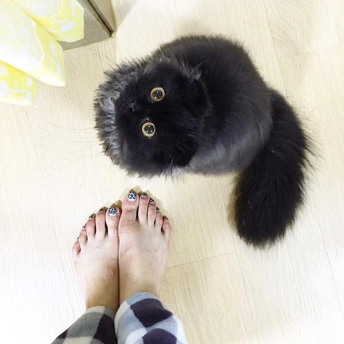 biggest eyes cat 4 (1)