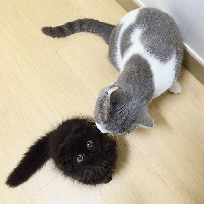 biggest eyes cat 7 (1)
