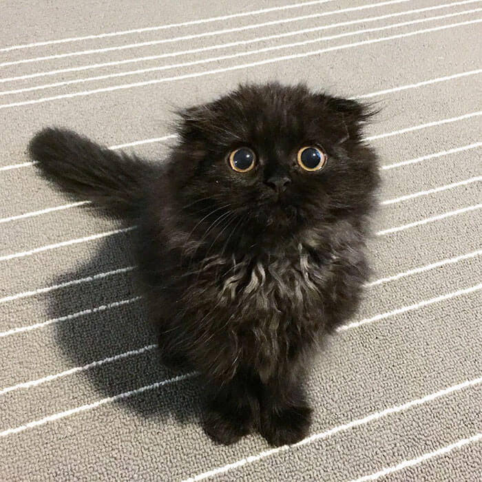 biggest eyes cat 8 (1)