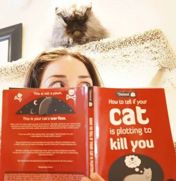 how to tell if your cat is planning to kill you 15 (1)