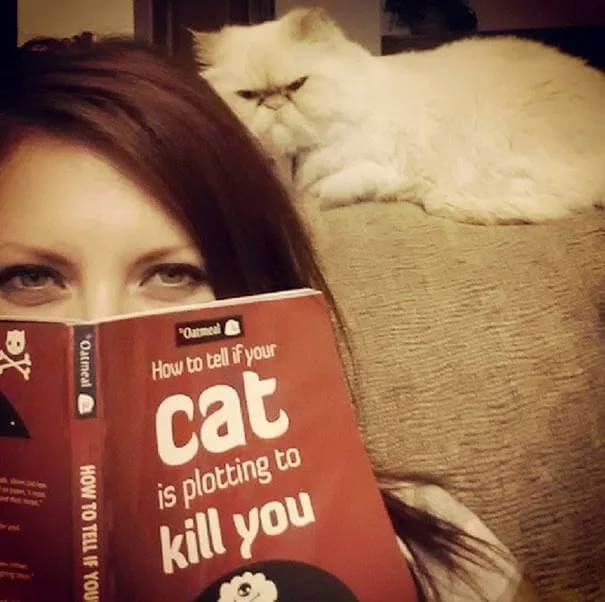 how to know if your cat is plotting to kill you 4 (1)