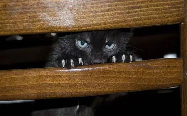 how to know if your cat is plotting to kill you 7 (1)