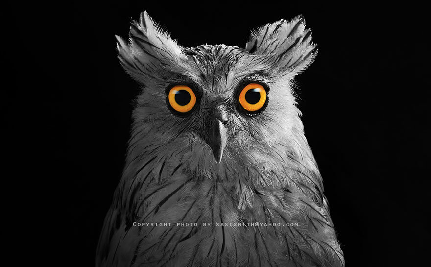 owl pictures 10 (1)