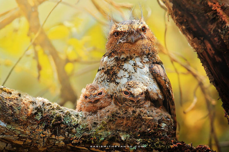 owl pictures 11 (1)