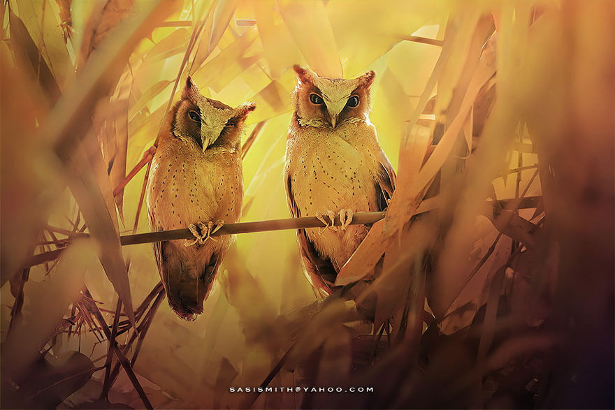 owl pictures 12 (1)