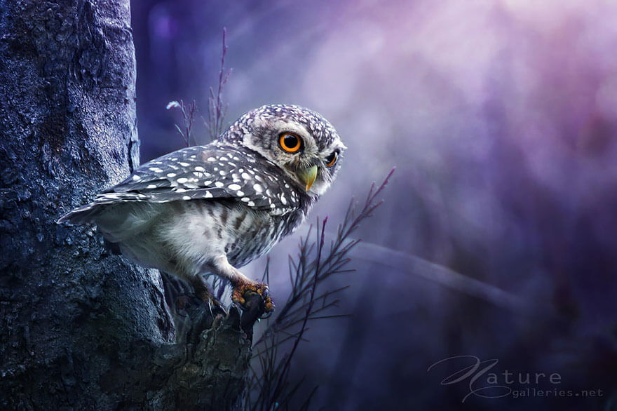 owl photography 13 (1)