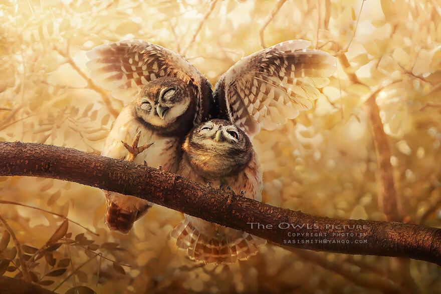 owl photography 2 (1)