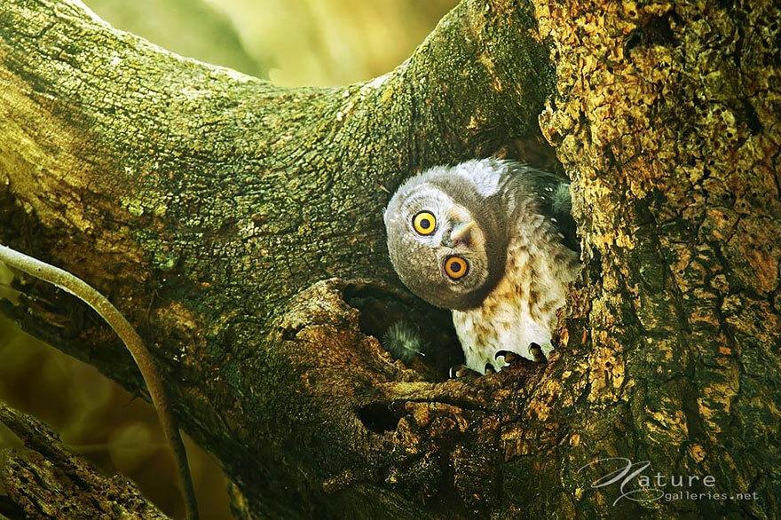 owl photography 3 (1)
