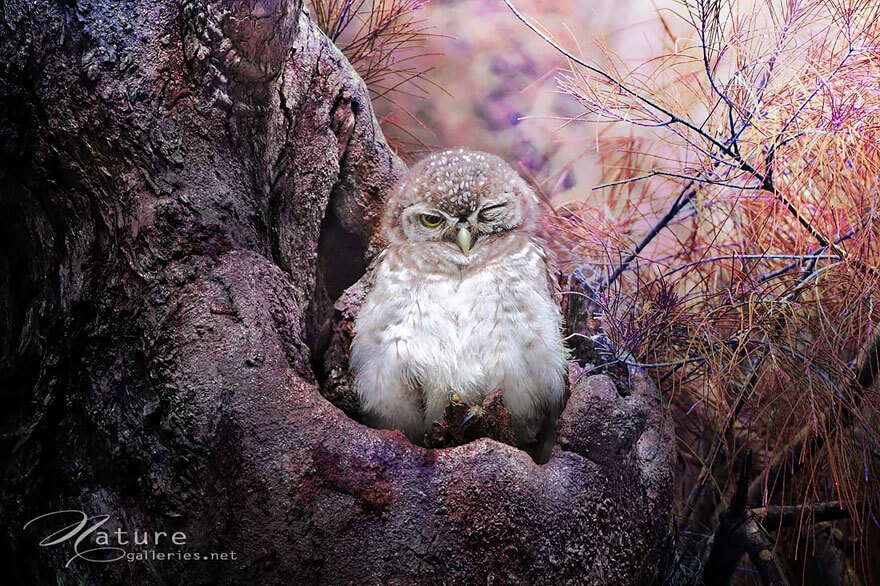 owl photography 4 (1)