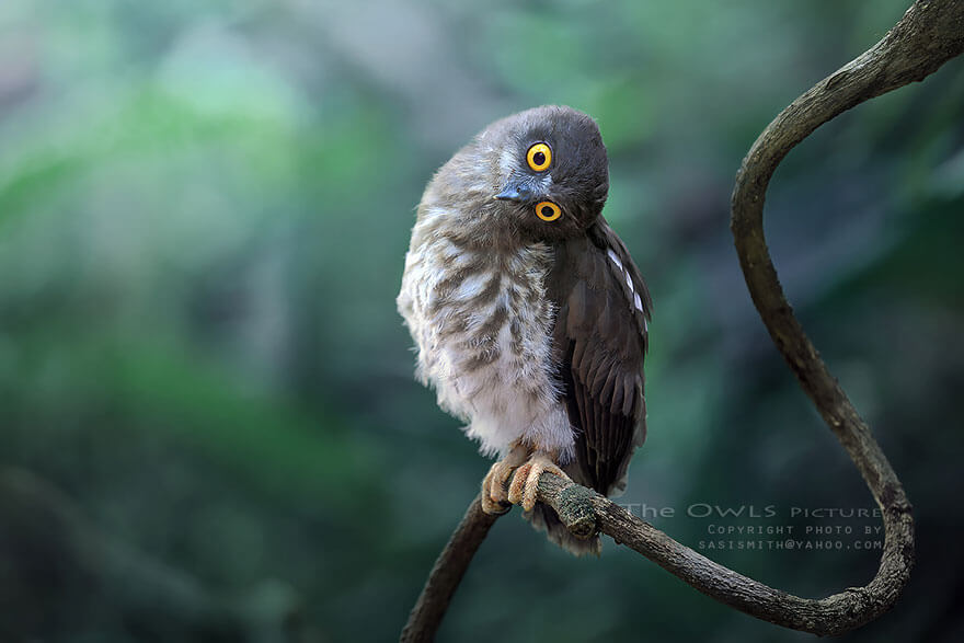 owl photos 6 (1)