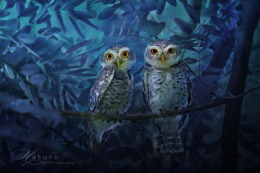 owl photos 7 (1)
