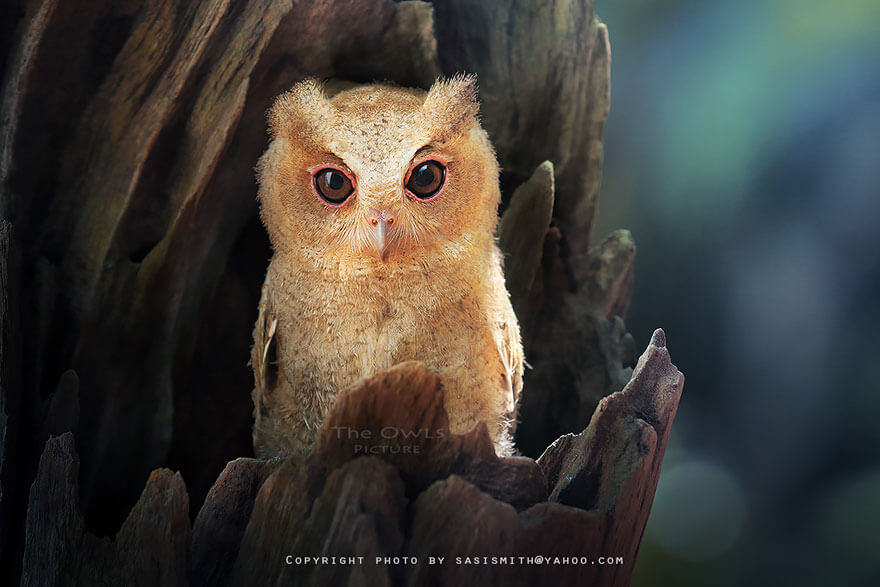 owl photos 8 (1)