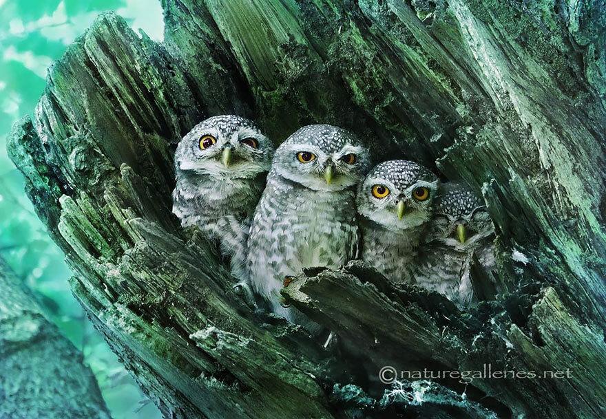 owl photos 9 (1)