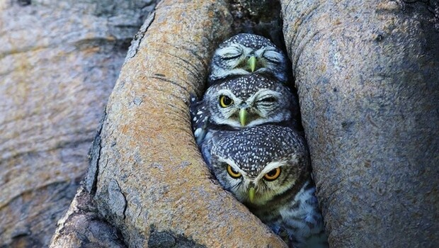 owl photography feat (1)