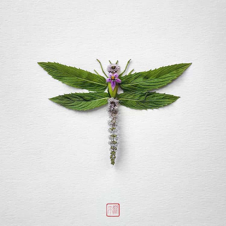 raku inoue insects from flowers 5 (1)