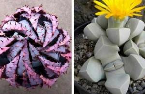 unusual plants feat (1)