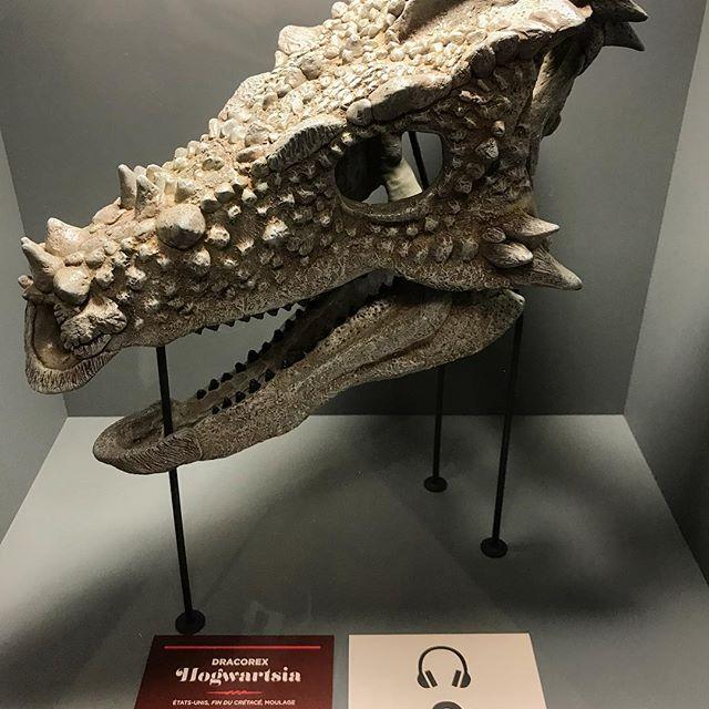 pachycephalosaurus facts 10
