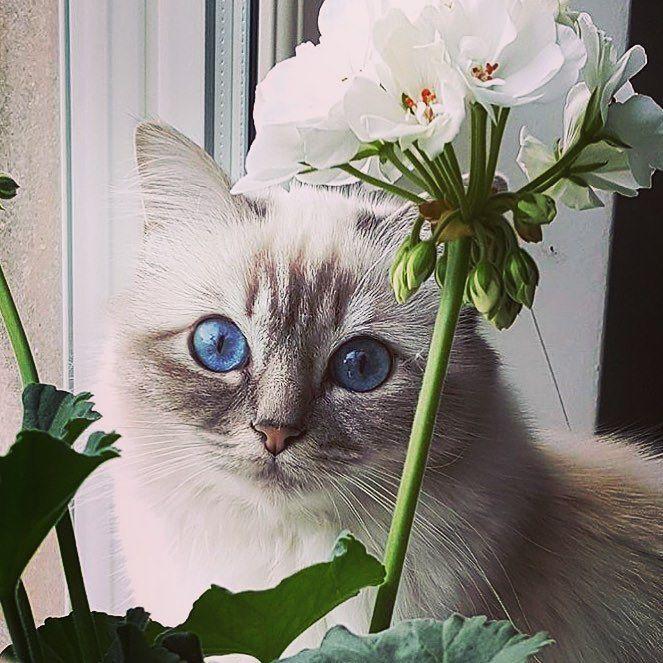 Karl Lagerfeld cat named choupette