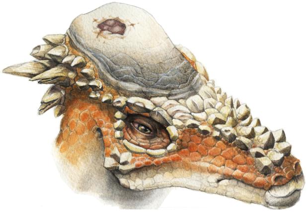 800px-pachycephalosaurus