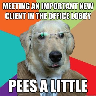 Business Dog pics 15