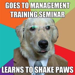 Business Dog pics 17