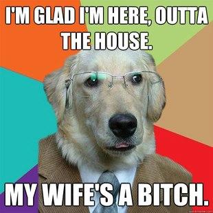 Business Dog pics 18