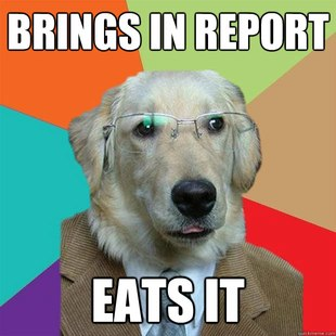 Business Dog images 20