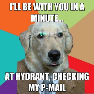 Business Dog images 22