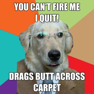 Business Dog images 24