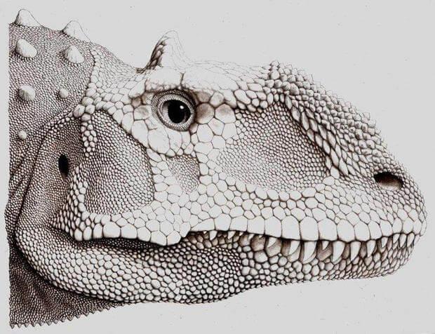 Majungasaurus facts 11 (1)