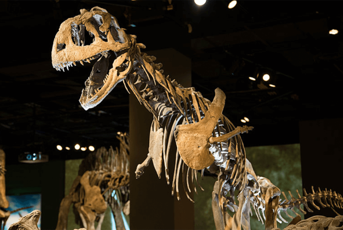 Majungasaurus facts (2)
