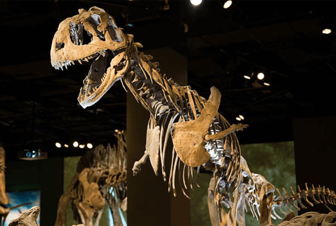 Majungasaurus facts (2)