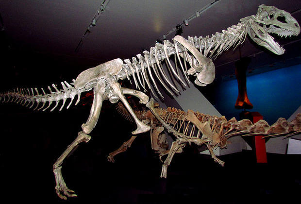 Majungasaurus facts 3 (1)